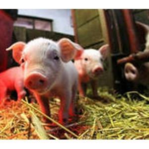 Налагая запрет и ограничивая импорт мясной продукции, Россия защищает отечественный агропром